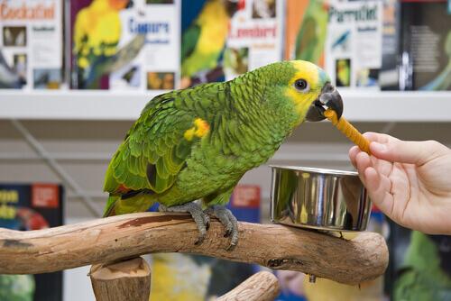 Come evitare di essere truffati in un negozio di animali