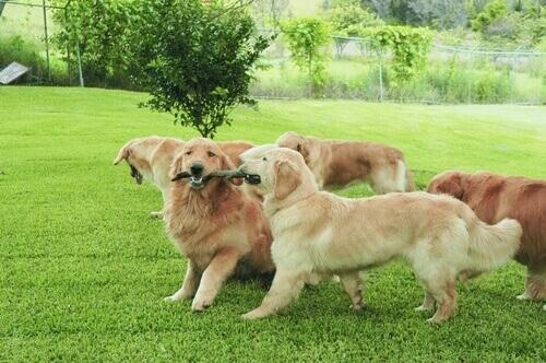 Perché i cani si annusano reciprocamente?