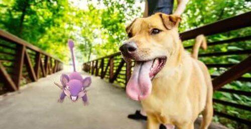 Pokemon Go salva la vita ad un cane anziano