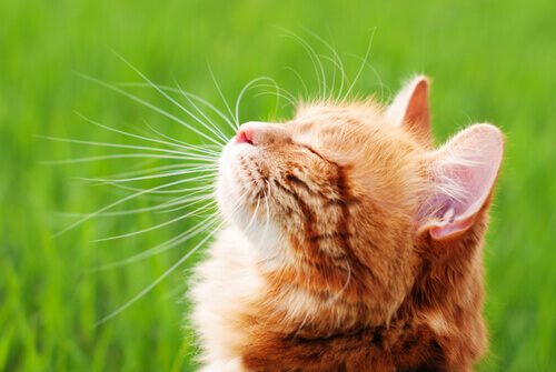 I migliori repellenti contro i gatti da preparare a casa