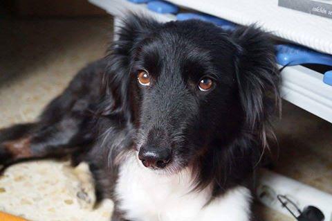 Terapie per il recupero di cani maltrattati