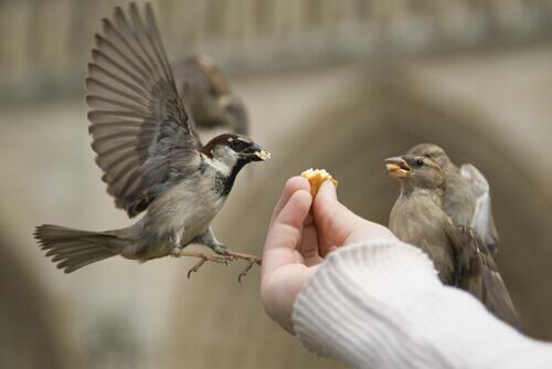 Persona che dà briciole agli uccelli