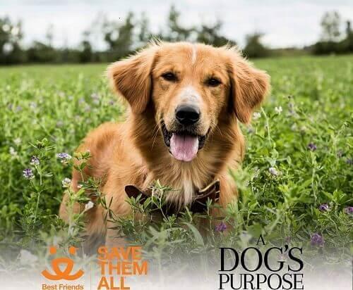 """No all'uscita di """"A dog's purpose"""" per difendere gli animali"""