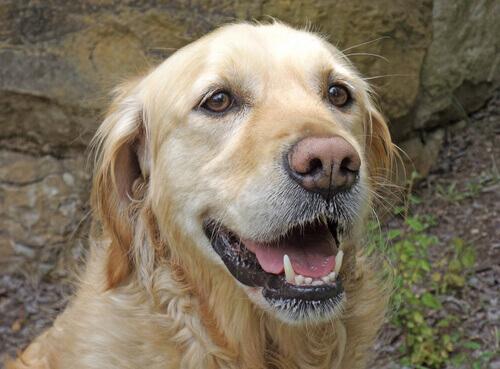 Baffi, uno strumento fondamentale per i cani