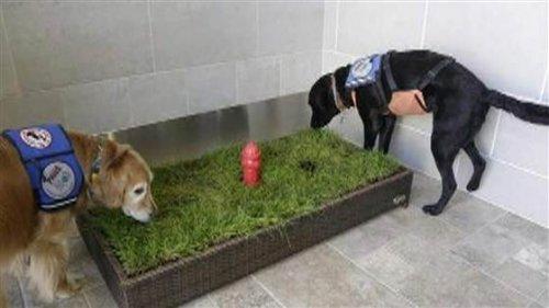 Sapevate dell'esistenza di bagni per cani negli aeroporti?