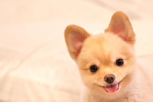 Nomi ideali per i cani più vivaci