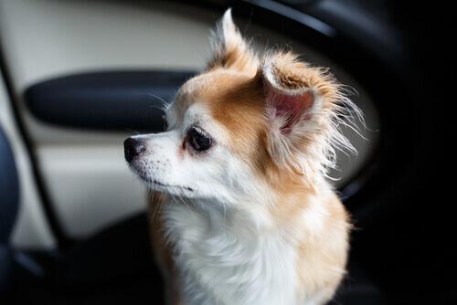 Un uomo rompe il finestrino di una BMW per salvare la vita ad un cane