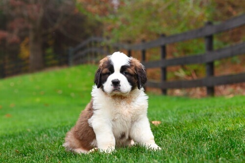 Due sostanze ottime per la salute dei cani