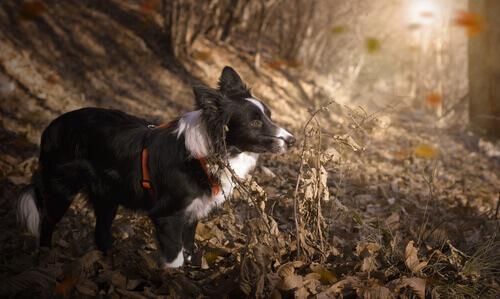 Le 10 razze di cani più sportive