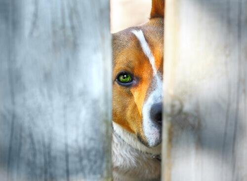 I progressi della giustizia colombiana nei confronti degli animali