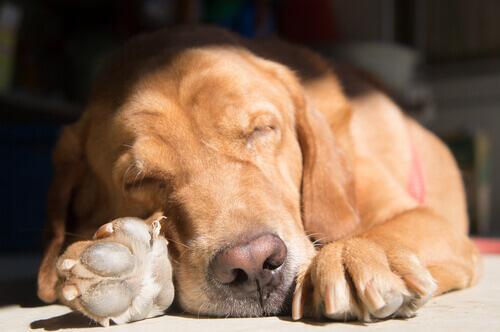 Le posizioni assunte dai cani mentre dormono