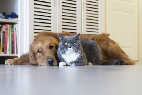 House sitting: vacanze gratis durante cui badare ad un animale domestico