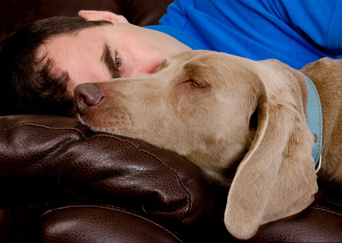 posizioni in cui dorme il cane