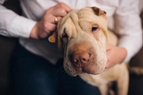 I nostri cani ci conoscono meglio di chiunque altro