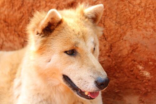 Il vostro cane soffre di problemi di stomaco? Aiutatelo!