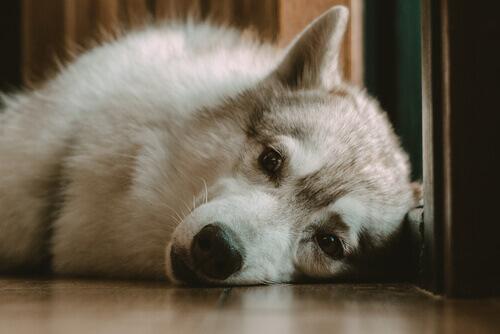 E se il mio cane la notte non dorme?