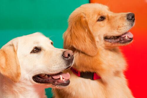 Cani che percepiscono gli attacchi epilettici