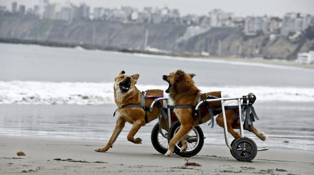 Aperto in Perù un rifugio per cani disabili