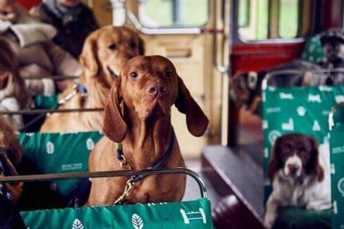Londra crea un autobus per cani
