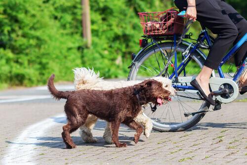 Se portate il vostro cane in bicicletta, seguite questi consigli
