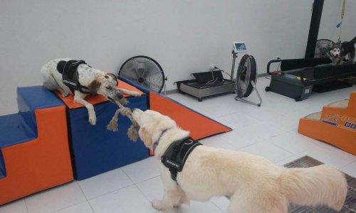 Body Dog, la prima palestra per cani