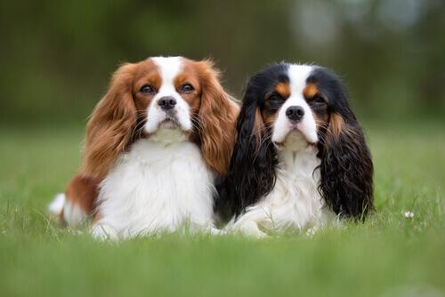 Cani adatti alle persone molto occupate
