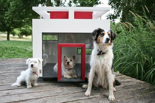 Scoprite le cucce per cani più lussuose