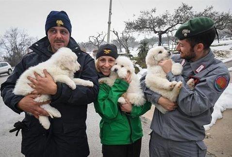 Tre cuccioli sono stati salvati dalle macerie dell'hotel Rigopiano