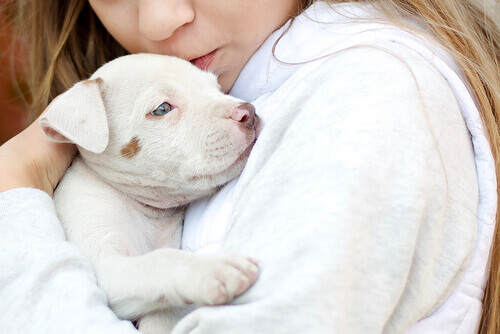 Gli animali usati come terapia per il Disturbo dello Spettro Autistico