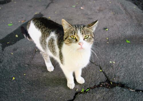 Cosa fare se si trova un gatto di casa abbandonato?