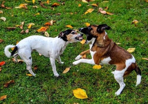 Come fermare un litigio tra cani?