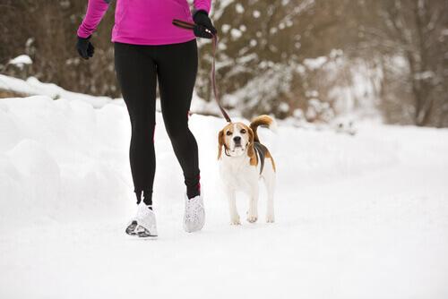 Effetto Lassie: il vostro cane può aiutarvi a mantenervi in forma