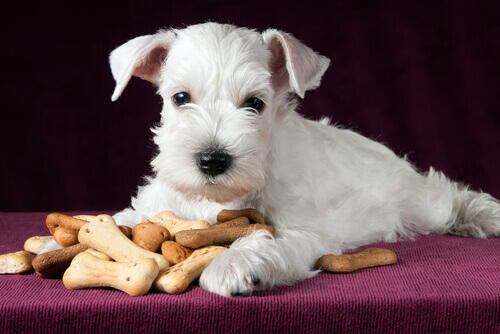 Snack sani per il vostro cane