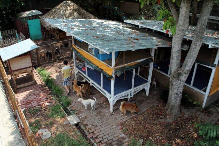 Bambino che ha creato un rifugio per animali