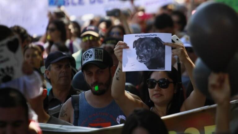 Il Cile approva un'importante legge in difesa degli animali