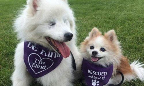 La bella amicizia tra i due cagnolini, Hoshi e Zen