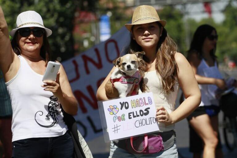 protesta per approvazione legge cholito