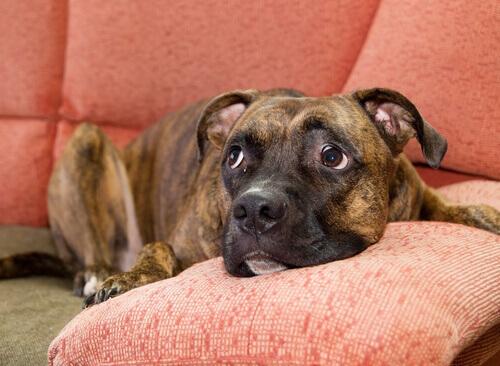 Trucchi per calmare un cane spaventato dai rumori