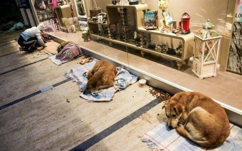 Un centro commerciale diventa rifugio per cani randagi