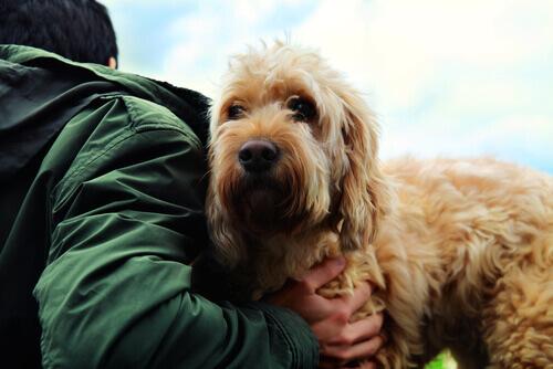 I segreti della vera amicizia tra cani e persone