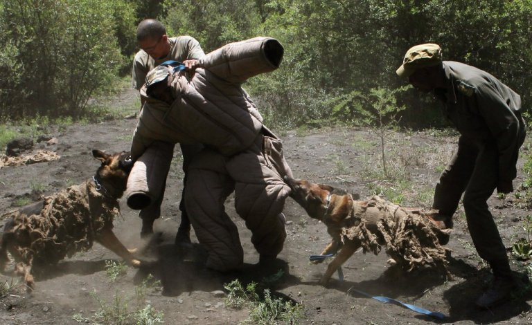 Cani contro la caccia illegale in Africa
