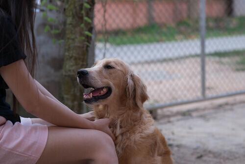 I cani possono comprendere il linguaggio umano?