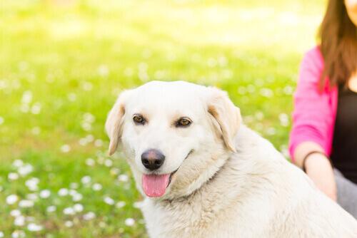 5 cose che non piacciono ai vostri cani