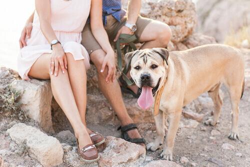 5 benefici di convivere con un cane