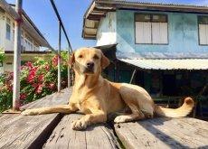 cane con vicini