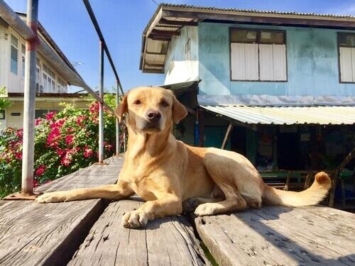 Norme da rispettare per mantenere buoni rapporti tra cane e vicinato
