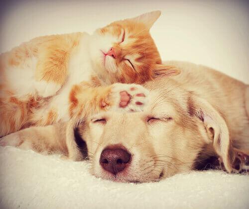 3 malattie che colpiscono sia i cani che i gatti