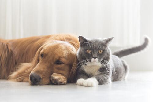 Le 7 malattie più pericolose che possono colpire gli animali
