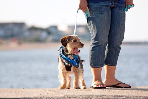 cane al guinzaglio del padrone in riva al mare