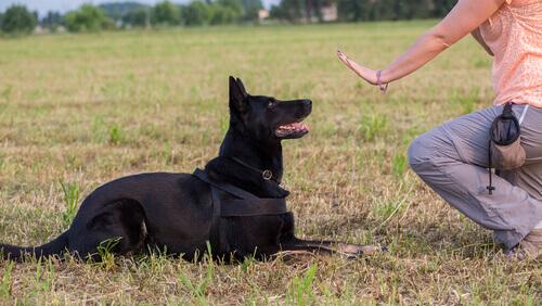 Fate in modo che il vostro cane vi rispetti